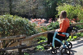 Young woman watching flamingos while sitting in a wheelchair with an orange jacket